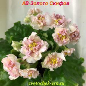 АВ-Золото Скифов (Фиалковод)