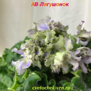 АВ-Лягушонок (Фиалковод)