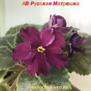 АВ-Русская Матрёшка (Фиалковод)