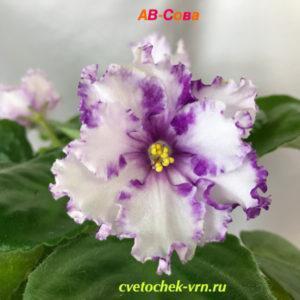 АВ-Сова (Фиалковод)