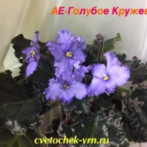 АЕ-Голубое Кружево (Е.Архипов)