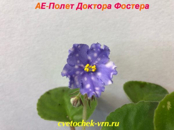 АЕ-Полет Доктора Фостера (Архипов)