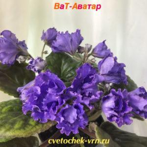 ВаТ-Аватар (Т.Валькова)