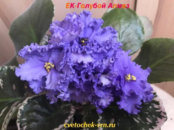 ЕК-Голубой Алмаз