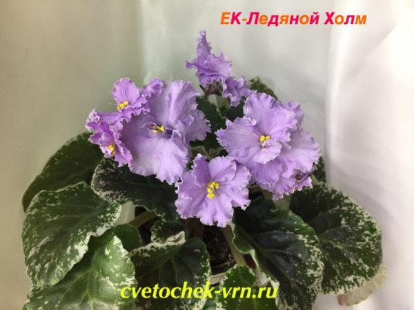 ЕК-Ледяной Холм