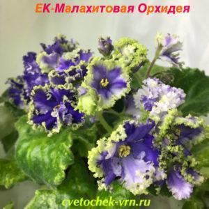 ЕК-Малахитовая Орхидея Спорт
