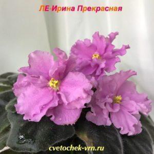 ЛЕ-Ирина Прекрасная
