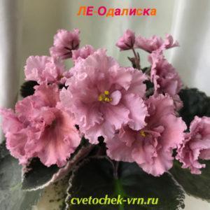 ЛЕ-Одалиска