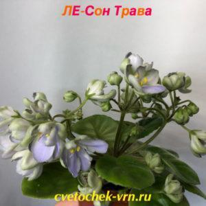 ЛЕ-Сон Трава