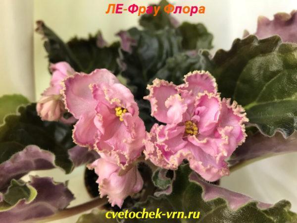 ЛЕ-Фрау Флора