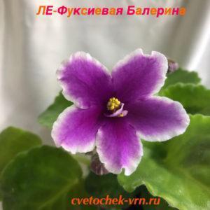 ЛЕ-Фуксиевая Балерина