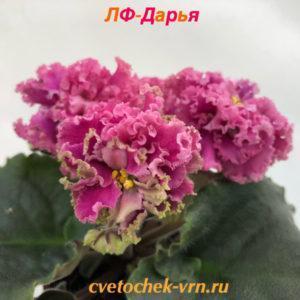 ЛФ-Дарья (Л.Федосеева)