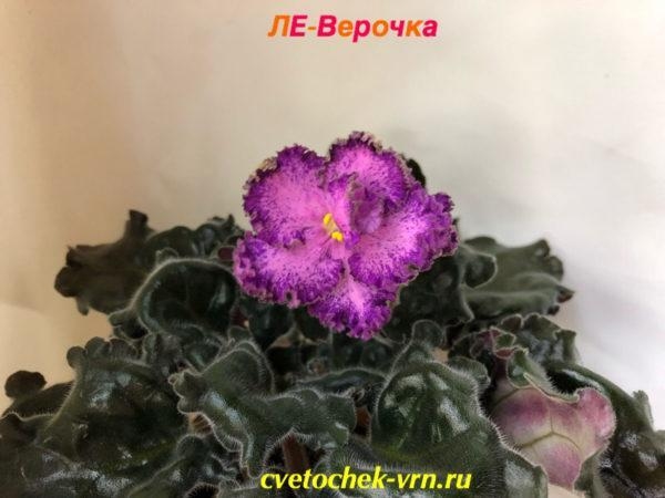 Ле-Верочка