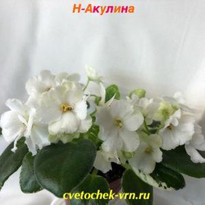 Н-Акулина (Н.Бердникова)