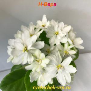 Н-Вера (Н.Бердникова)