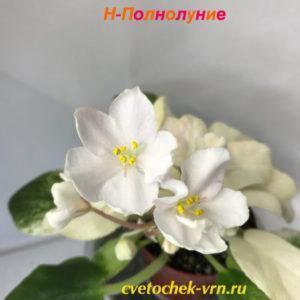 Н-Полнолуние (Н.Бердникова)