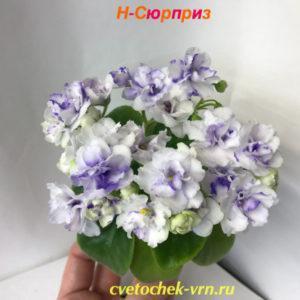 Н-Сюрприз (Н.Бердникова)
