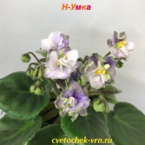 Н-Умка (Н. Бердникова)