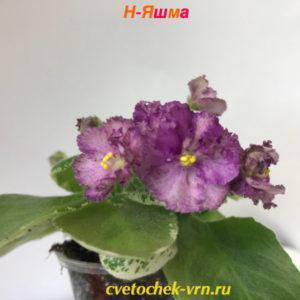 Н-Яшма (Н.Бердникова)