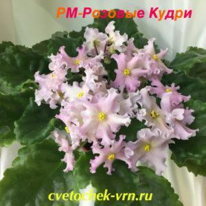 РМ-Розовые Кудри (Н. Скорнякова)