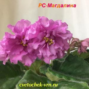 РС-Магдалина
