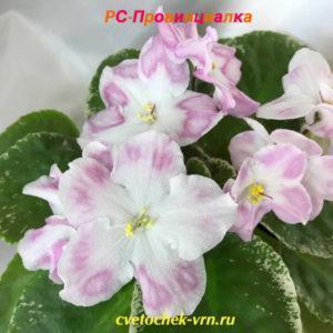 РС-Провинциалка