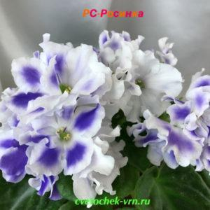 РС-Росинка