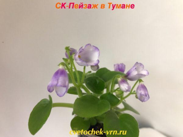 СК-Пейзаж в Тумане (А.Кузнецов)