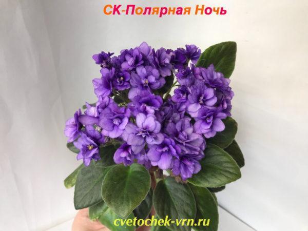 СК-Полярная Ночь (А.Кузнецов) мини