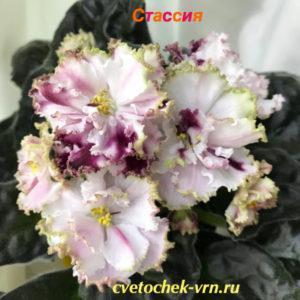 СМ-Стассия (К. Морев)