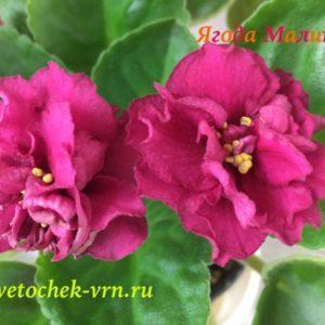 Ягода Малина (Т.Дадоян)