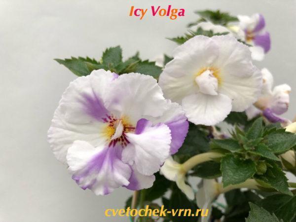 Icy Volga (S.Saliba)