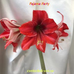 Pyama Party