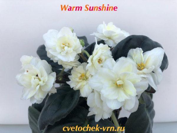 Warm Sunshine(LLG/Sorano)