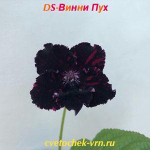 DS-Винни Пух