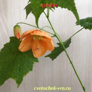 Apfelsin