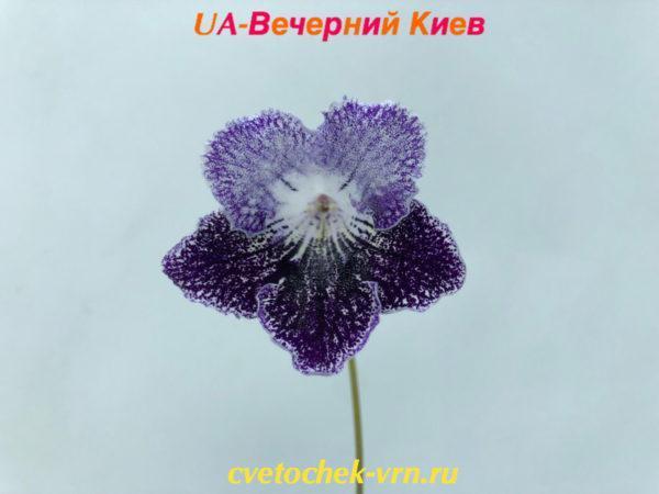 UA-Вечерний Киев