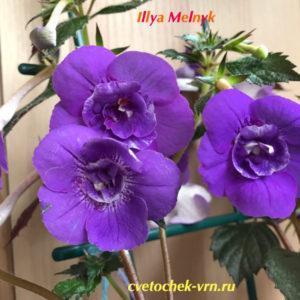 Illya Melnyk (С.Салиба)
