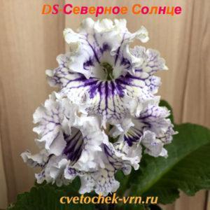 Краля (Н.Павлюк)