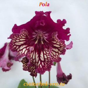 Pola, 7023
