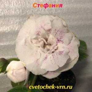 Стефания (Е.В.Слюсарь)