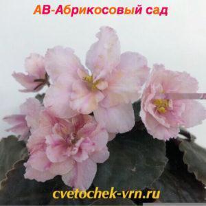 АВ-Абрикосовый Сад (Фиалковод)