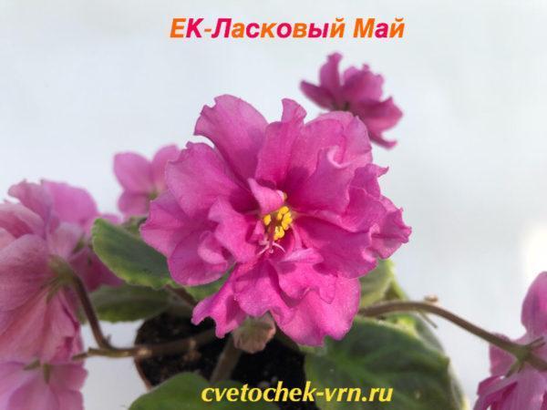 ЕК-Ласковый Май