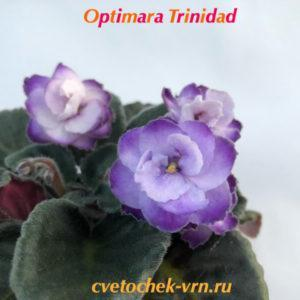 Optimara Trinidad (Holtkamp)