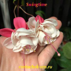 Фуксия Swingtime