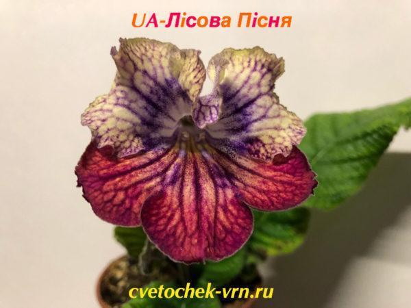 UA-Лiсова Пicня