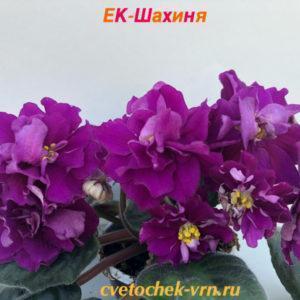 ЕК-Шахиня