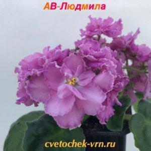АВ-Людмила (Фиалковод)