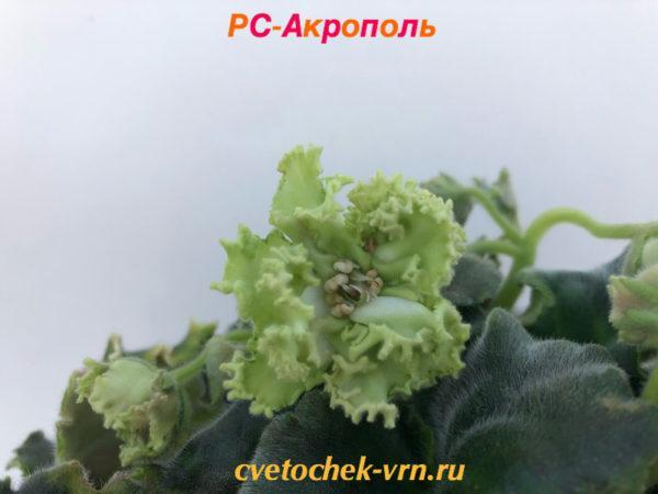 РС-Акрополь