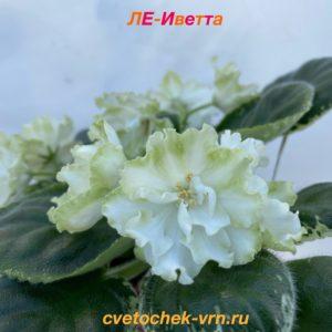 ЛЕ-Иветта